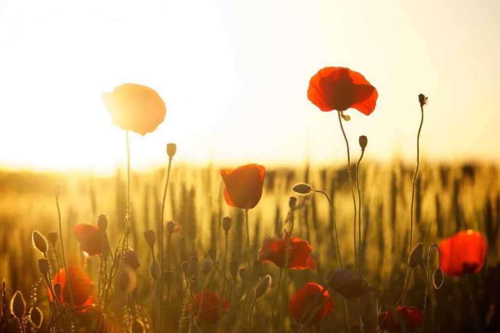 Eigene Beerdigung planen - Bestattungsvorsorge und Checkliste